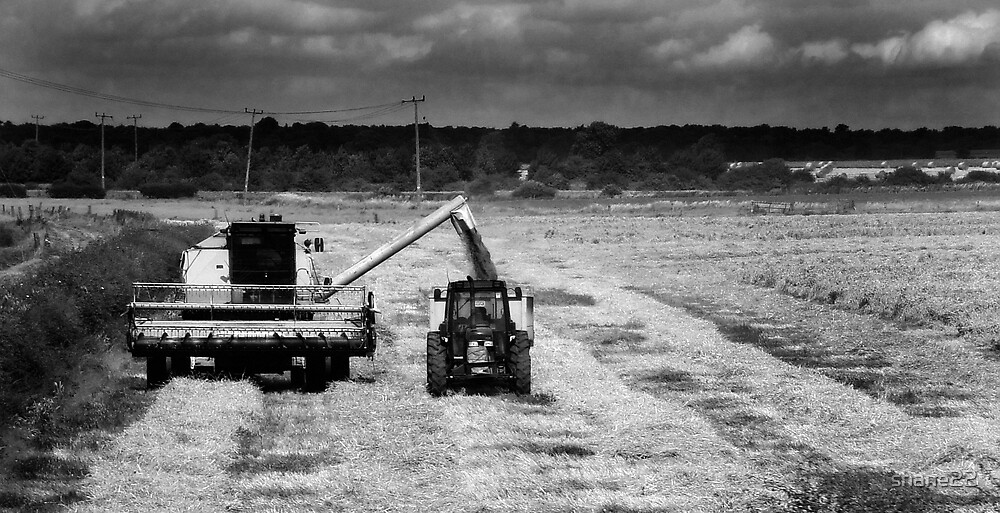 At Work in the Field Monochrome by shane22