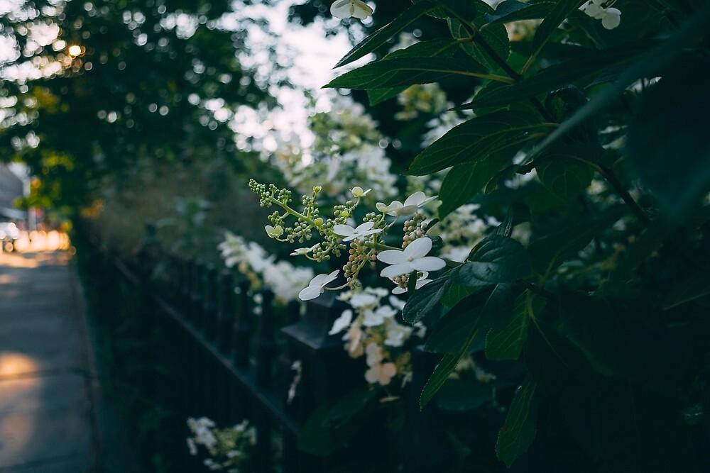 Park flowers at sunset by jlynnrosen