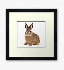 Cute Baby Rabbit | Animals Framed Print