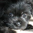 """Puppy Look"" by Steven Maynard"