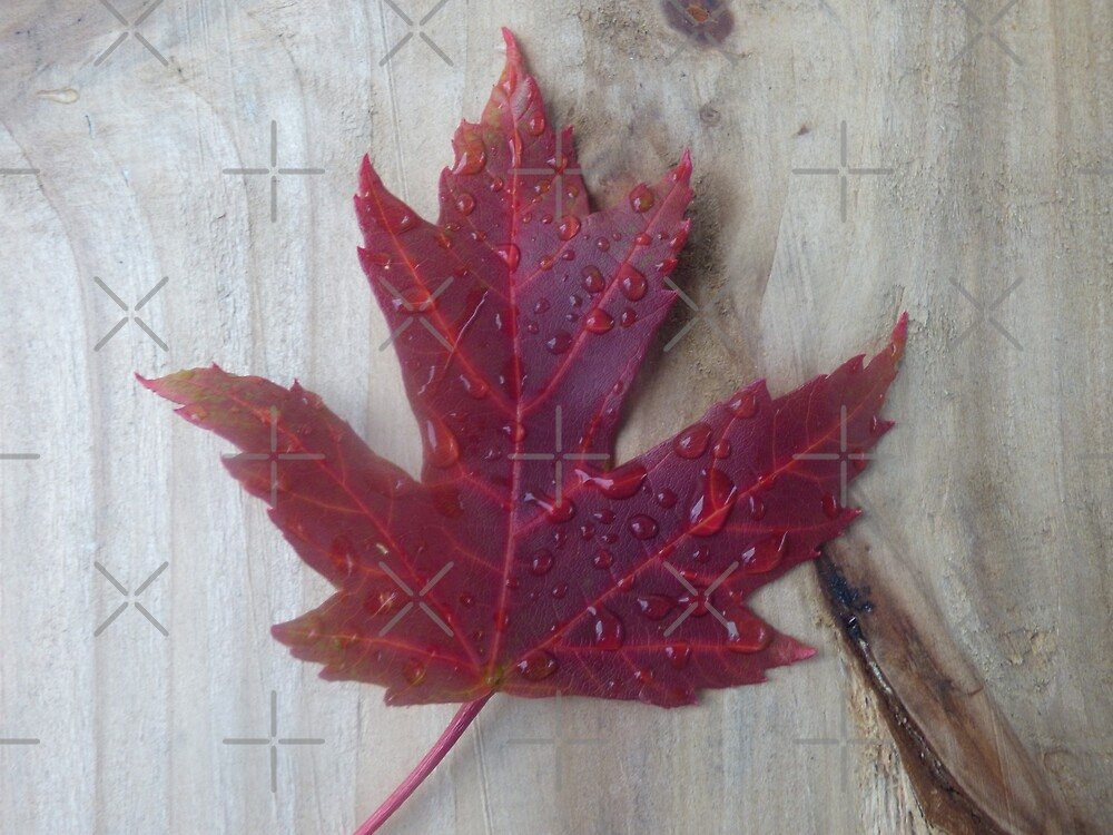 Canadian Impressions by Leslie Montgomery