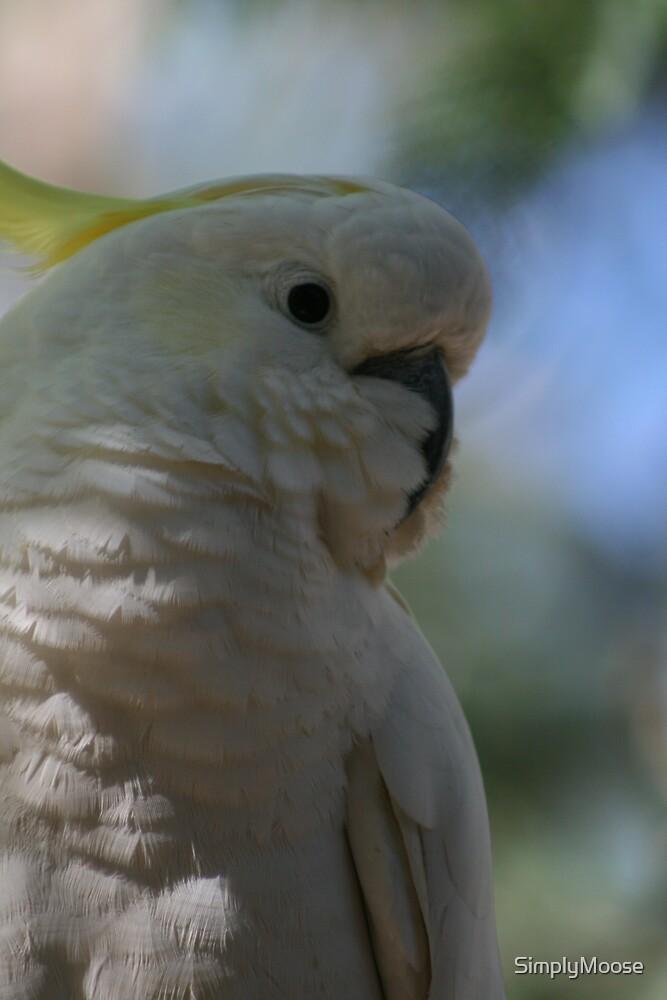 Cockatoo in tree 1 by SimplyMoose