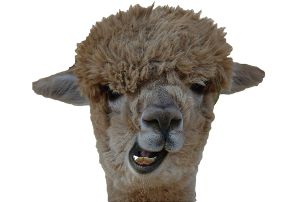 Goofy Alpaca by lizwaitinas