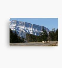 Banff Canvas Print