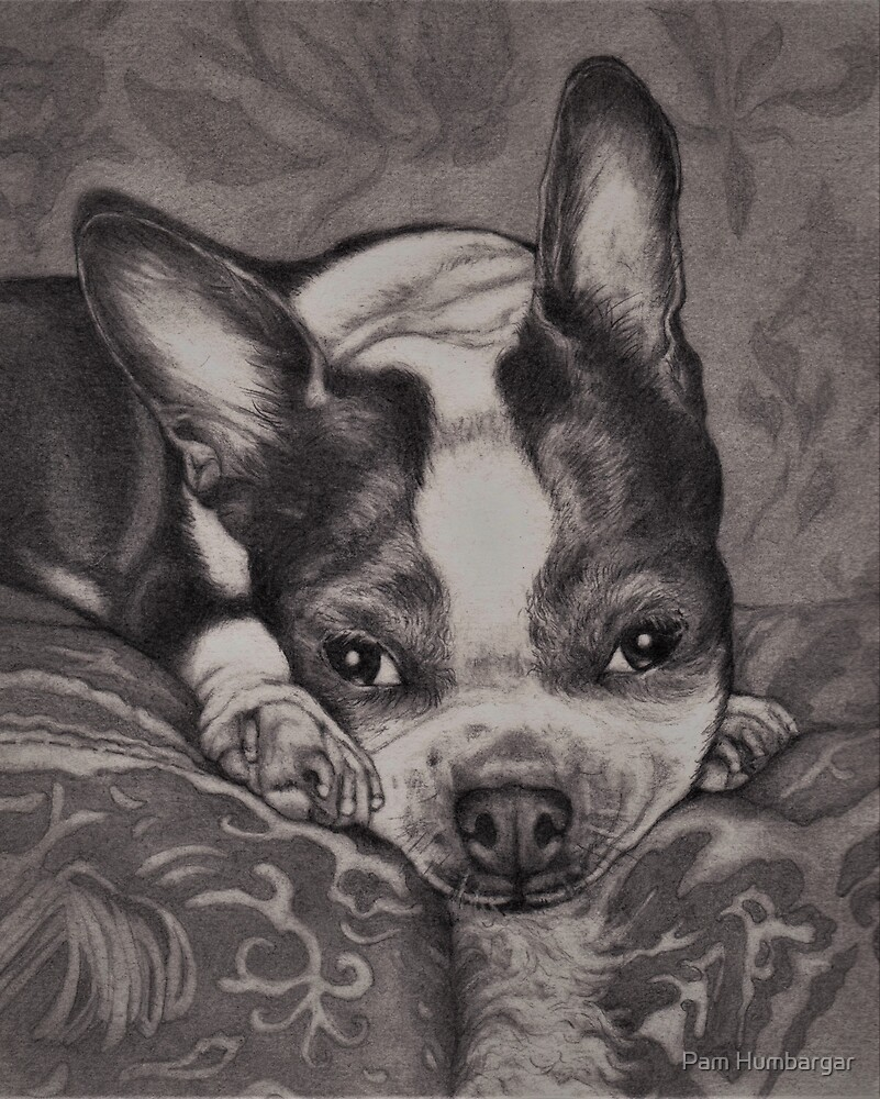 Dear Old Boston on Her Pillows by Pam Humbargar