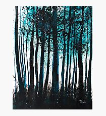 Frost Forrest Photographic Print