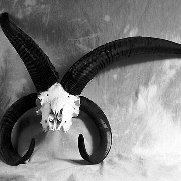 J. Goat by SprungNoggin