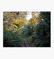 Along the Leaves - Nature Photographic Print