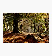 Nature - Woods and Leaves Photographic Print