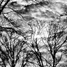 Sun, Clouds, and Winter Trees by Brian Gaynor
