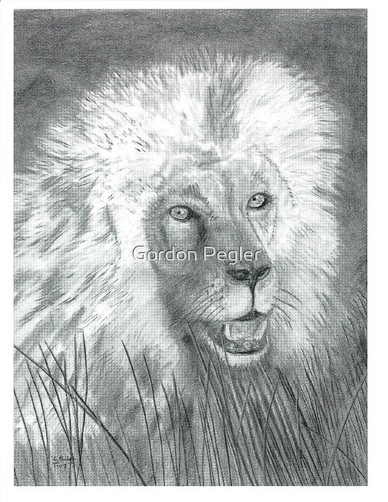 Lion - Charcoal by Gordon Pegler