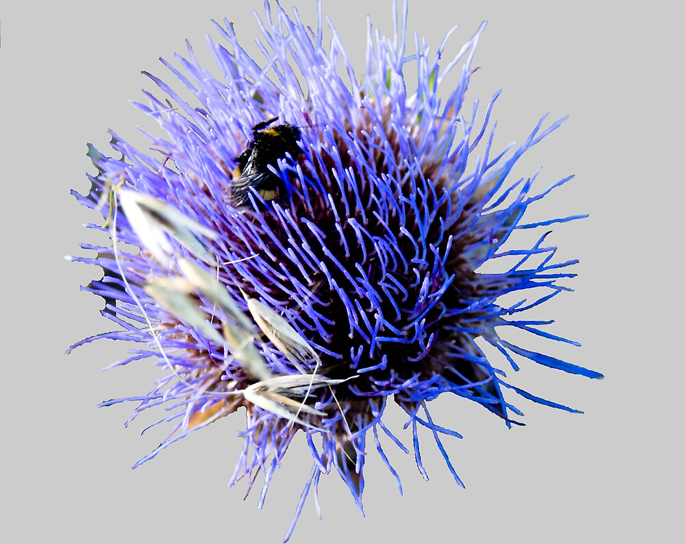 Thistle and Bee by hmcfadden