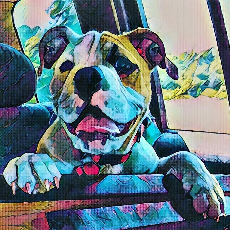 my dog Ellie  by drewbeedoo