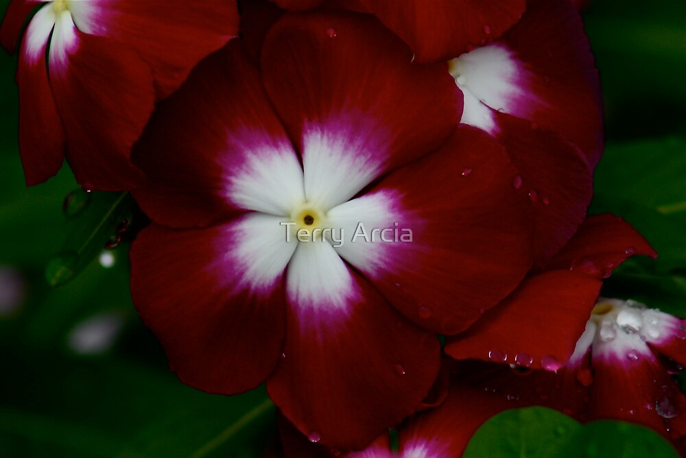 Georgia Flower by Terry Arcia