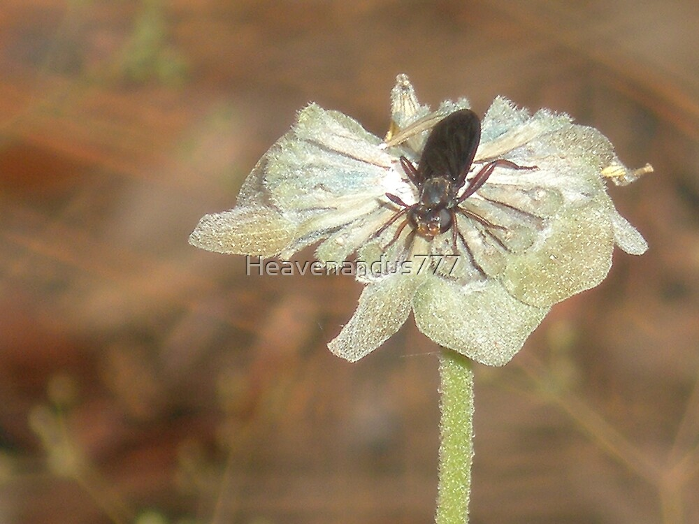 Dead Flower w / Insect by Heavenandus777