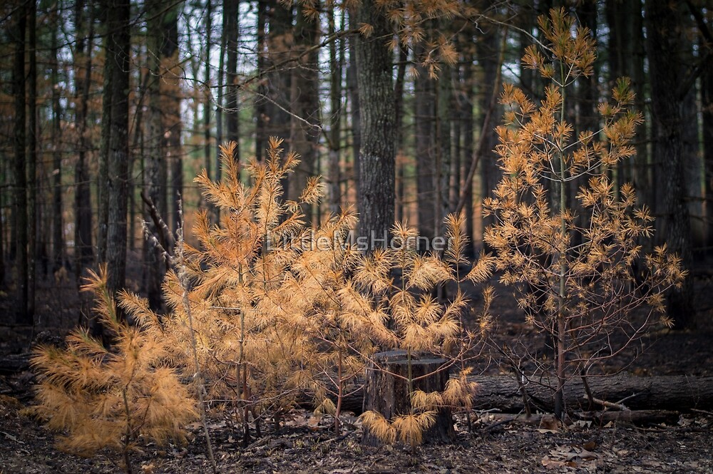 Fire in the Forest by LittleMsHorner
