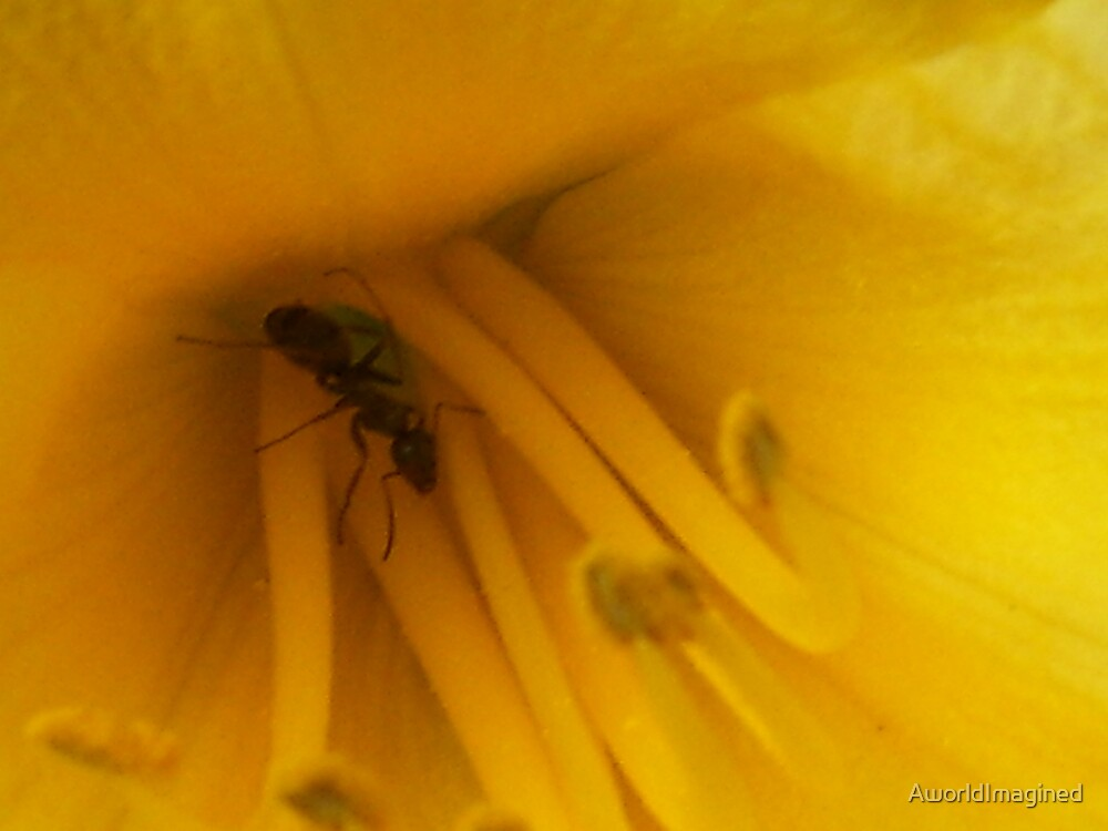 YELLOW FLOWER by AworldImagined