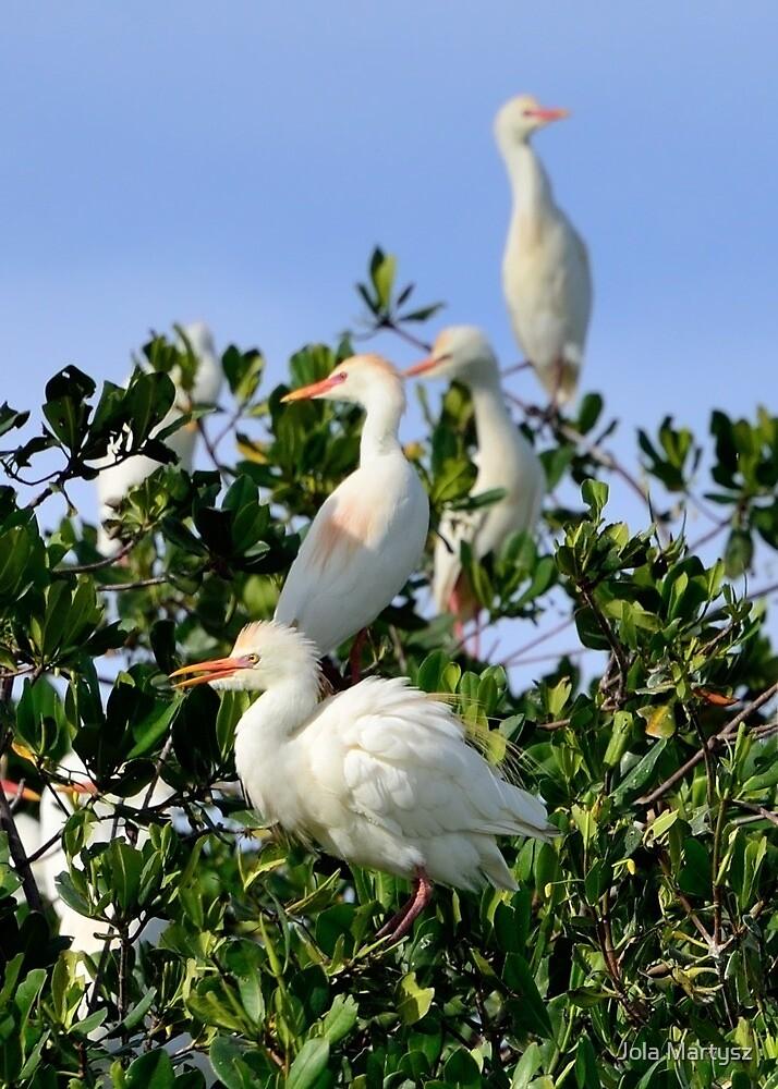 Birds Quartet by Jola Martysz