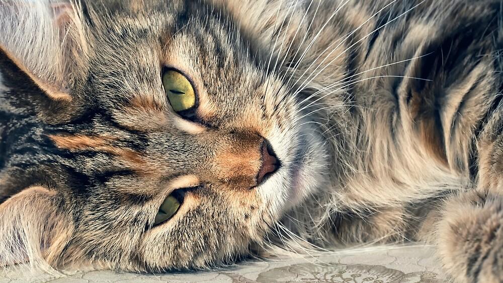 Face sleeping cat by OllegNik