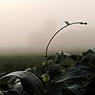 Mist by Brett Yoncak