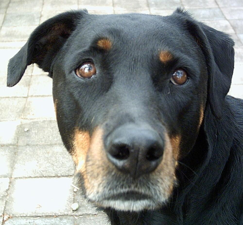 black dog by wendy075
