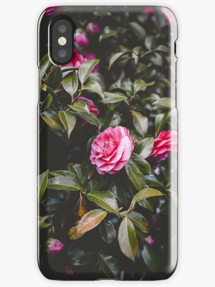 Beautiful Pink Flowers by tristanrenaud