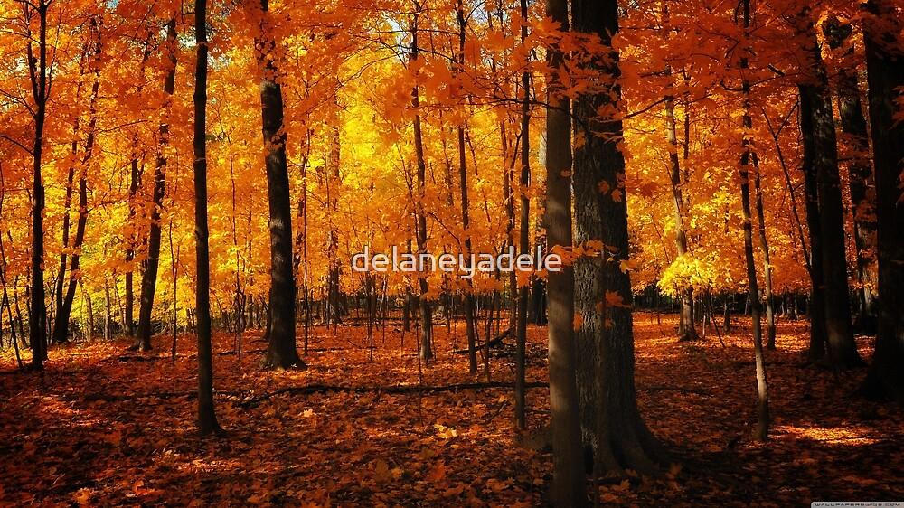 Autumn Woods by delaneyadele