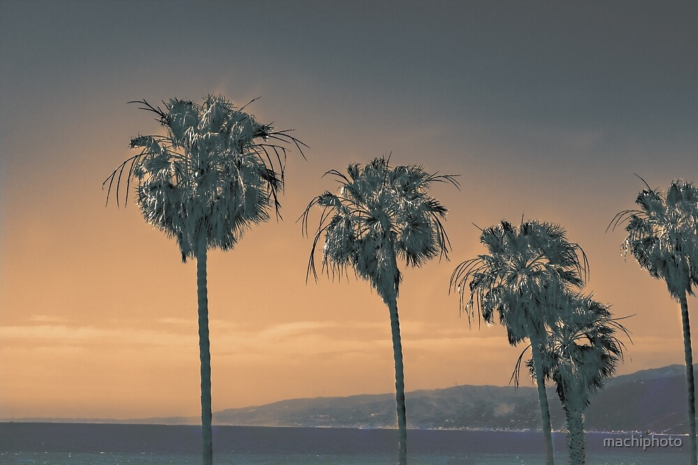 Palms by machiphoto