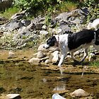 Patrick Testing the Water in the River Topolnita by Dennis Melling