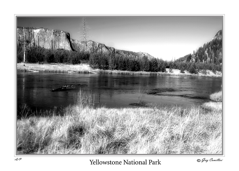 Madison River, Yellowstone National Park by gcamilleri