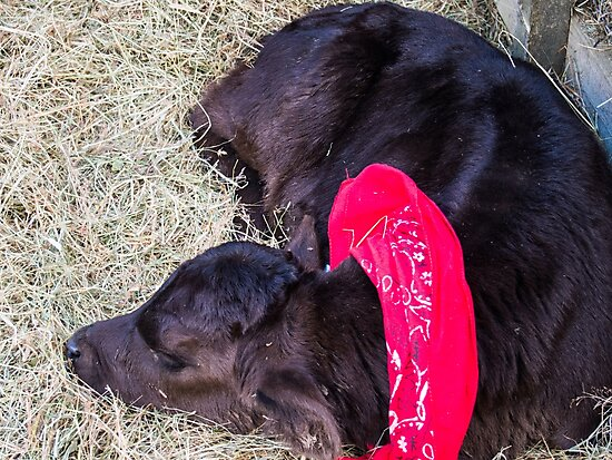Dog Asleep In Hay by Michael McGimpsey