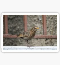 bird on wall Sticker