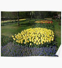Dazzling Golden Tulips Poster