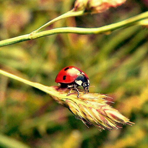 little red II by tangleduptight