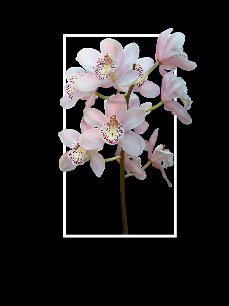 Orchids by Rod Wilkinson