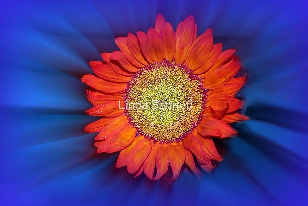 shine bright by Linda Sannuti