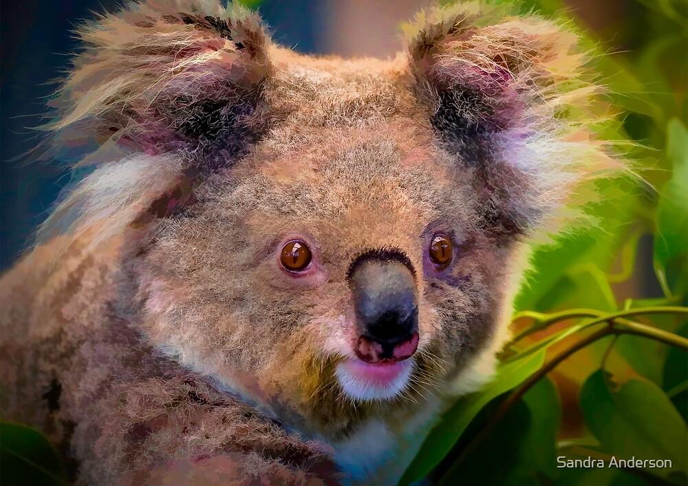 Koala Bear Art by Sandra Anderson