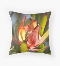 Beautiful Spring Protea Throw Pillow