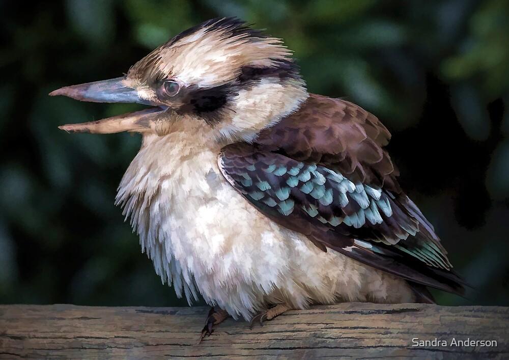 Kookaburra Art by Sandra Anderson