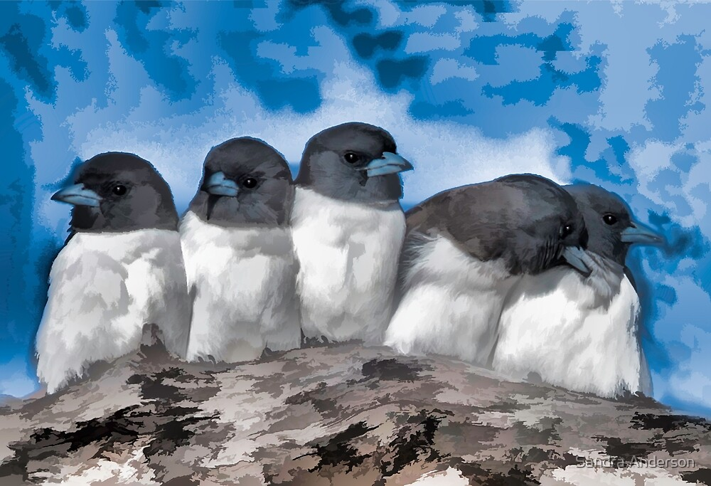Woodswallows Art by Sandra Anderson