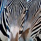 Zebra Patterns by Sue  Cullumber