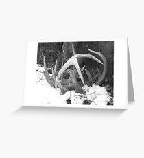 Antlers Greeting Card