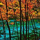 Autumn, Jiuzhaigou Valley 秋臨九寨沟 by Daniel H Chui