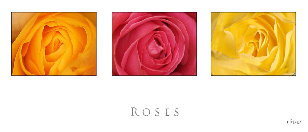 roses by dbax