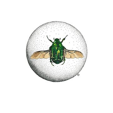 Flower Chafer by lillylotus