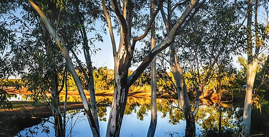 Morning Gum Trees by Lexa Harpell