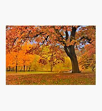 Fall at Larz Anderson Photographic Print
