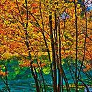 Autumn arrived to the Mirror Lake, Jiuzhaigou Valley 秋臨九寨沟 p3 by Daniel H Chui