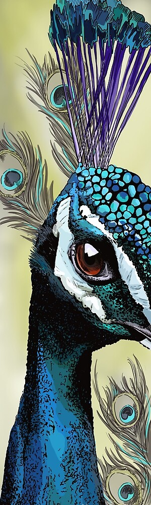 Peacock study 1 by Kate-Artist