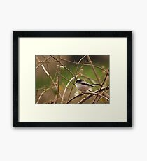 Long tailed tit  Framed Print